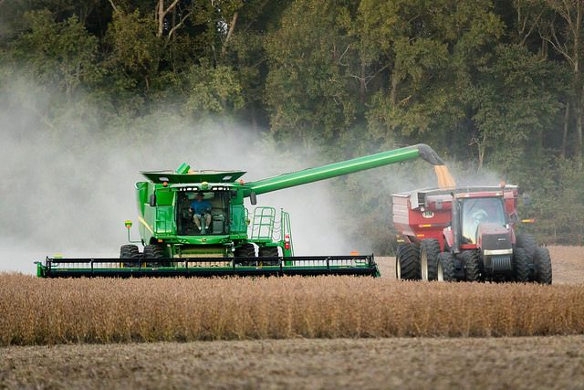 Soybean harvesting in Caroline County, Md.