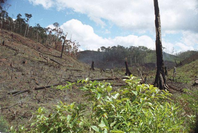 Deforestation in Madagascar. Photo by Jonathan Talbot, WRI
