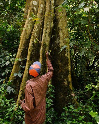 Kenyan man by tree