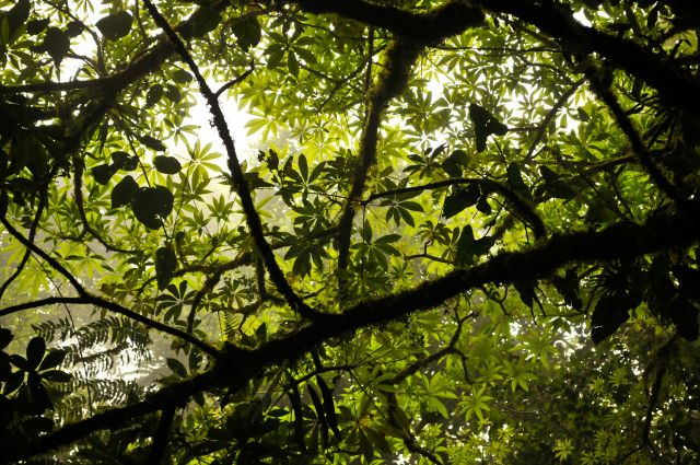 Light comes through the canopy of a Costa Rican forest. Flickr/WRI
