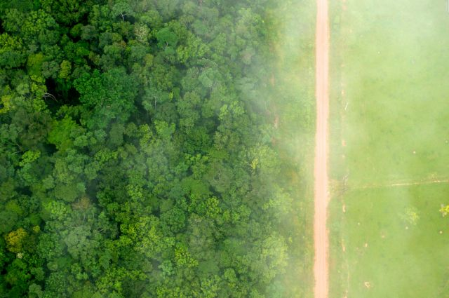 Tree cover loss is on the rise. Flickr/CIFOR
