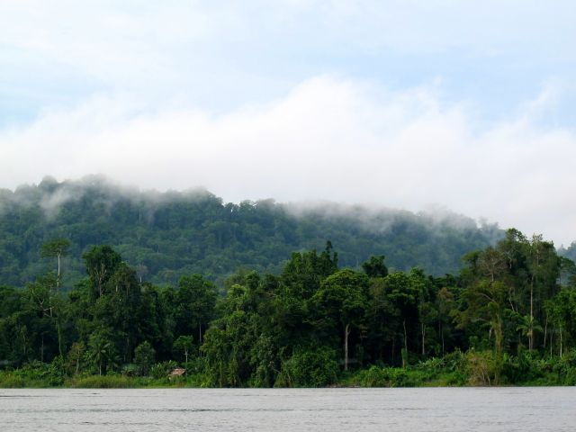 Forest on the Mamberamo River in Papua. Flickr/CIFOR