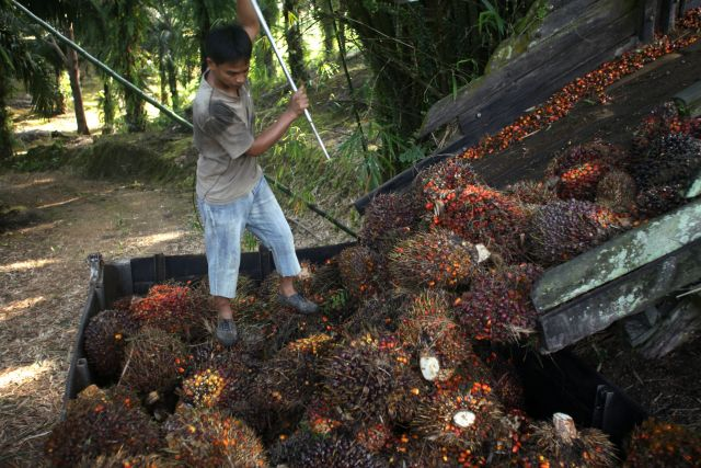 Loading oil palm fruit in Sabah, Malaysia. Photo by Greg Girard/CIFOR/Flickr