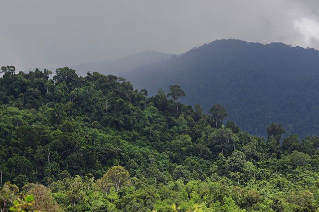 Ulu Mesen forest ecosystem in Aceh, Indonesia