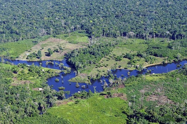Aerial view of Amazon rainforest near Manau