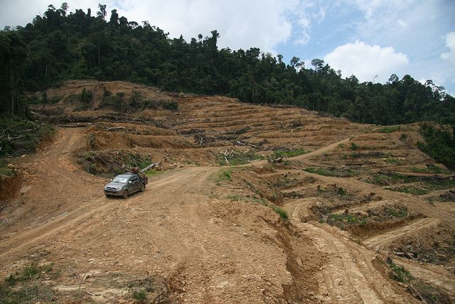 Land clearing for oil palm development in Sarawak, Malaysia. Photo by Wakx/Flickr.