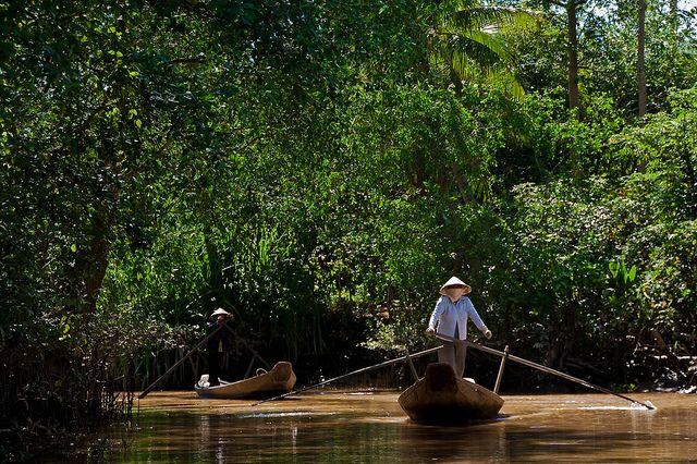 Mangrove forest in Vietnam's Mekong Delta.