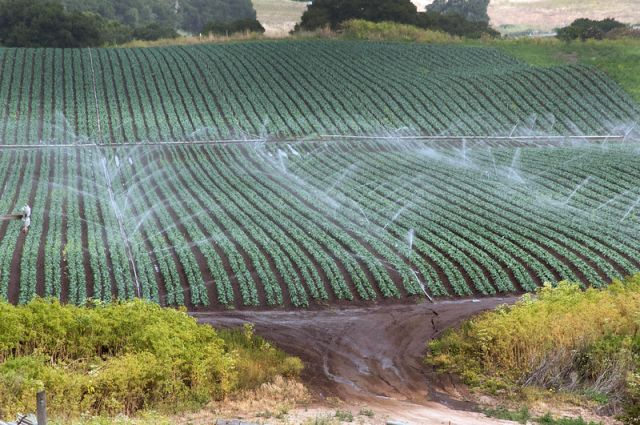 Conventional sprinkler irrigation