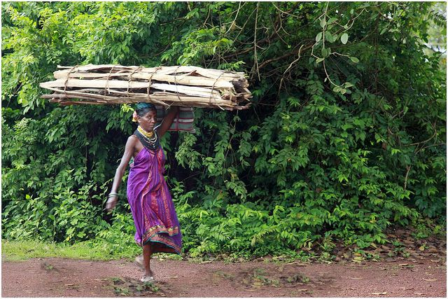 A woman collects firewood in India's Western Ghats.