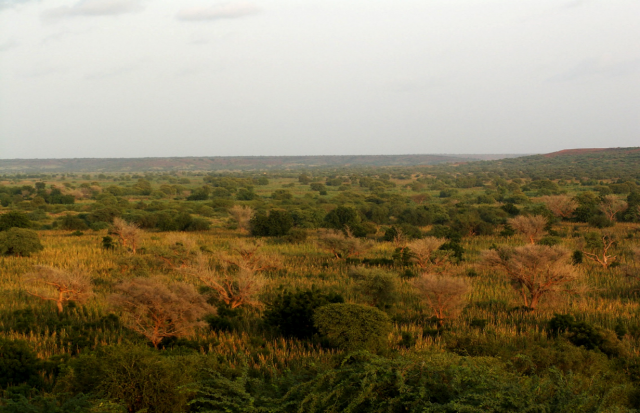 Restored landscapes now thrive across Niger. Credit: Gray Tappan/USGS