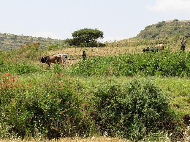 Bergers avec du bétail à Tigray, en Ethiopie. Mohammed Bakarr / FEM
