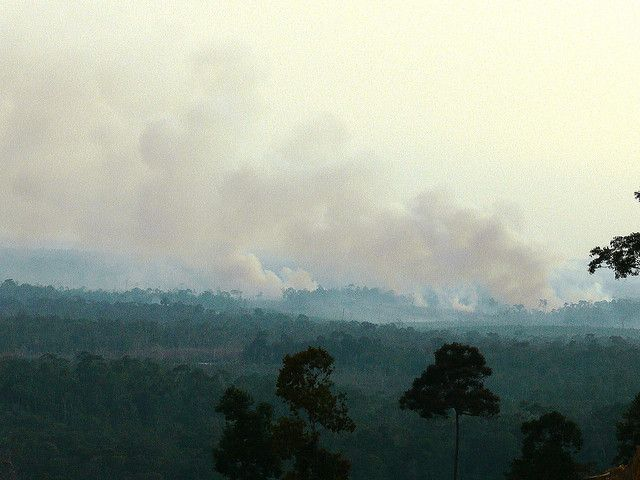 Forest fires in West Kalimantan, Indonesia. Photo Credit: Billy Gabriel/Flickr
