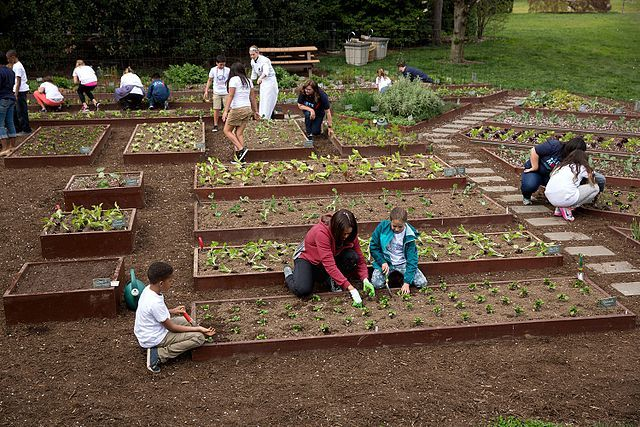 Children plant vegetables in the White House Kitchen Garden