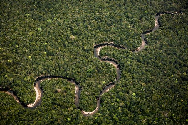 Amazon basin forest