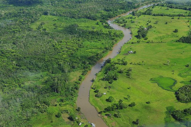 Aerial view of the Amazon rainforest. Photo credit: Neil Palmer, CIAT