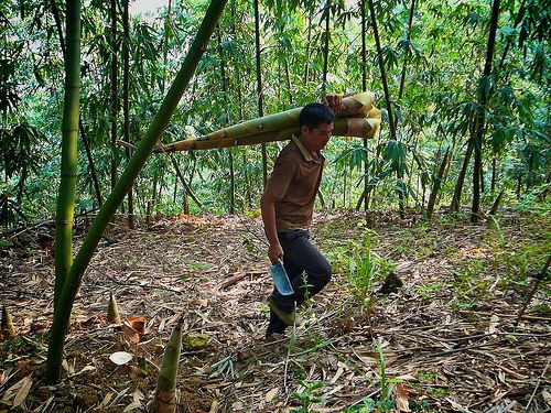 According to recent estimates, roughly 15 percent of all global greenhouse gas emissions originate from deforestation and land use change. Photo credit: Nick Hogarth for Center for International Forestry Research (CIFOR)