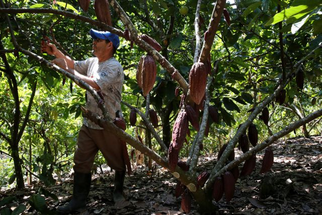 Producteur de cacao en Colombie. Flickr/World Bank Photo Collection.