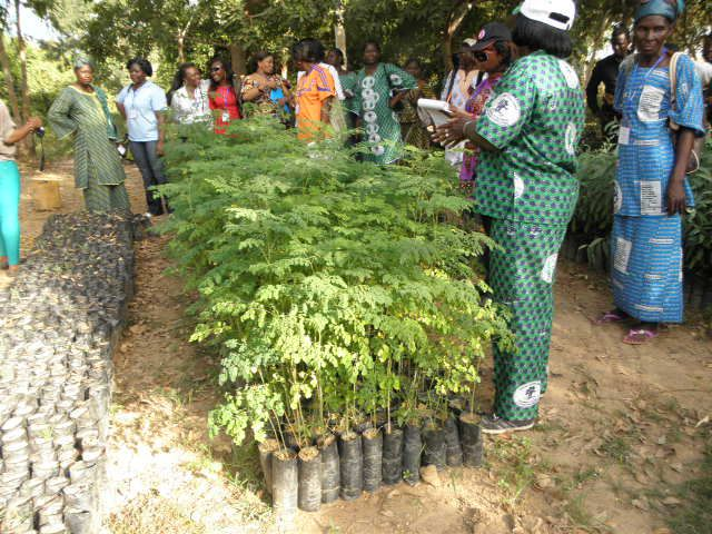 Women in Cameroon prepare to plant saplings. Photo by Cameroon Ecology.