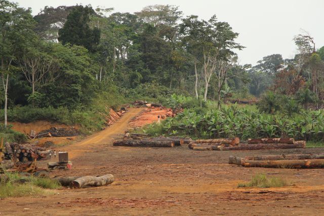 Forests cover roughly 98 percent of Equatorial Guinea's national land area. Photo credit: Pascal Douard, WRI
