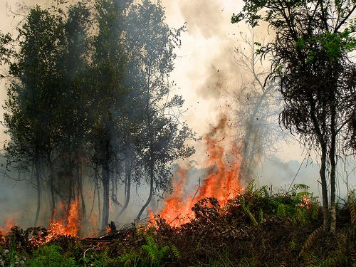A forest fire in Central Kalimantan, Indonesia, in September of 2011. Photo credit: Rini Sulaiman, Norwegian Embassy for Center for International Forestry Research