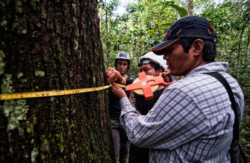 Global Forest Watch is an online forest monitoring system created by the World Resources Institute and more than 40 partners. Photo credit: Marco Simola, CIFOR