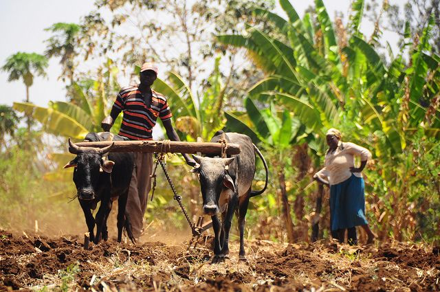 Kenyan farmers must adapt to altered conditions brought on by climate change. Photo credit: P. Casier, CGIAR