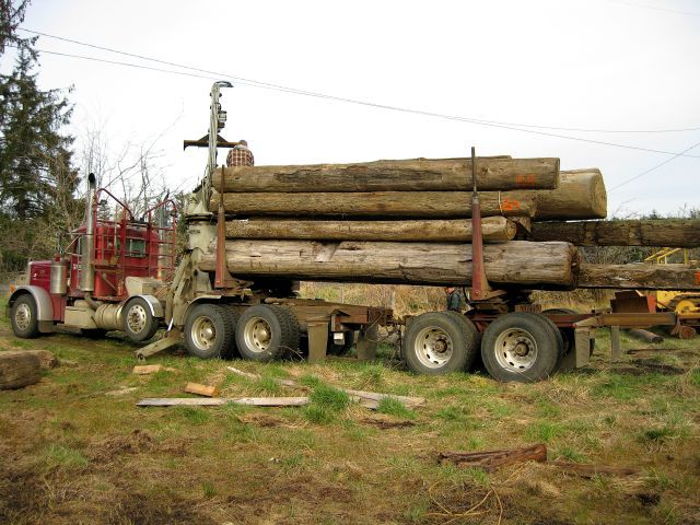 The Justice Department stated that personnel at J&L Tonewoods were fully aware that they were dealing in illegally sourced timber. Photo by Washington DNR/Flickr
