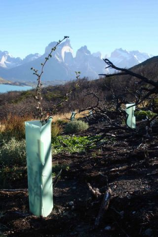 A tree-planting project in Patagonia