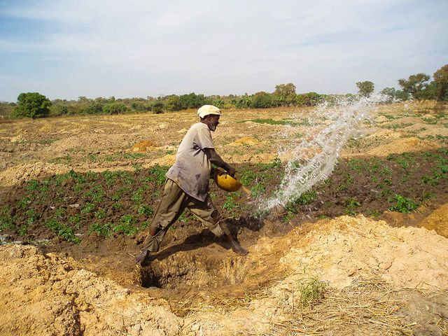 A farmer in Mali irrigates his crops. Photo by Tingju Zhu/IFPRI