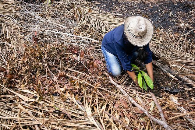 Planting native trees in Juruti. Joana Oliveira/WRI Brasil
