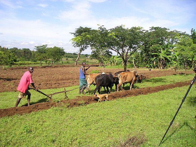 Uganda farmer