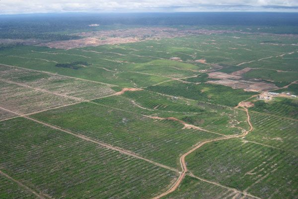 Land cleared to make way for United Cacao's 2,000 hectare (5,000 acre) plantation.  Photo by Mongabay.
