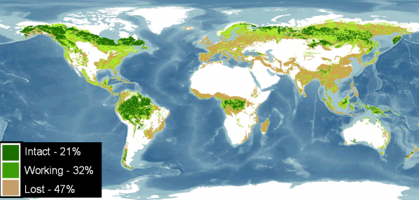 Map Of World Forests.State Of The World S Forests World Resources Institute