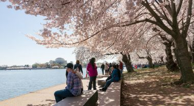 Cherry blossoms in Washington, DC park