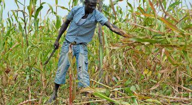 Kenyan farmer