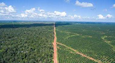 Palm Oil Plantations in Papua, New Guinea