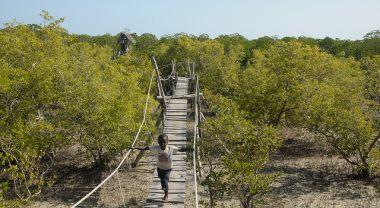 Dryland forest in Kenya