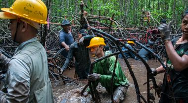 Researcher pulls up mangrove roots for carbon stock assessment, Kalimantan, Indonesia