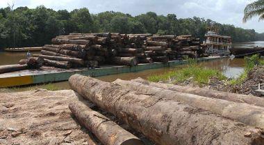 Logging in Brazil