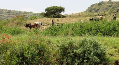 Herders with cattle in Tigray, Ethiopia. Mohammed Bakarr / GEF