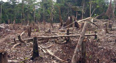 Amazon deforestation