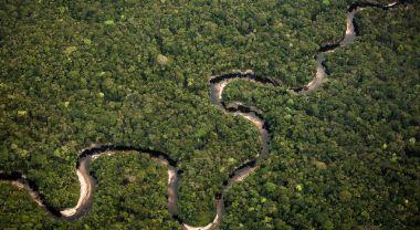 Amazon basin forest