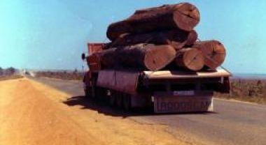 Logging in Mato Grosso, Brasil. Credit: c.alberto/ Flickr