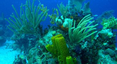 More than 75 percent of coral reefs in Caribbean are threatened. Photo credit: copepodo, Flickr