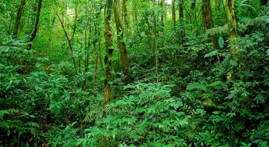 Costa Rica has built its economy by rebuilding forests. Photo by Geoff Gallice/Flickr