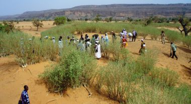 Restoring trees in drylands can improve food security. (Drylands, Mail) Photo by TREEAID/Flickr.