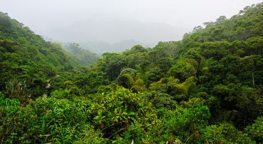 Primary forest in Ecuador's Maquipucuna Reserve. Photo by John Kellogg/Flickr