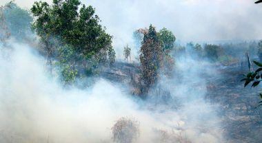 The majority of the fire alerts are concentrated in the Indonesian province of Riau, on the island of Sumatra. Photo credit: CIFOR, Flickr 2011