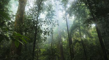 jungle forest trees
