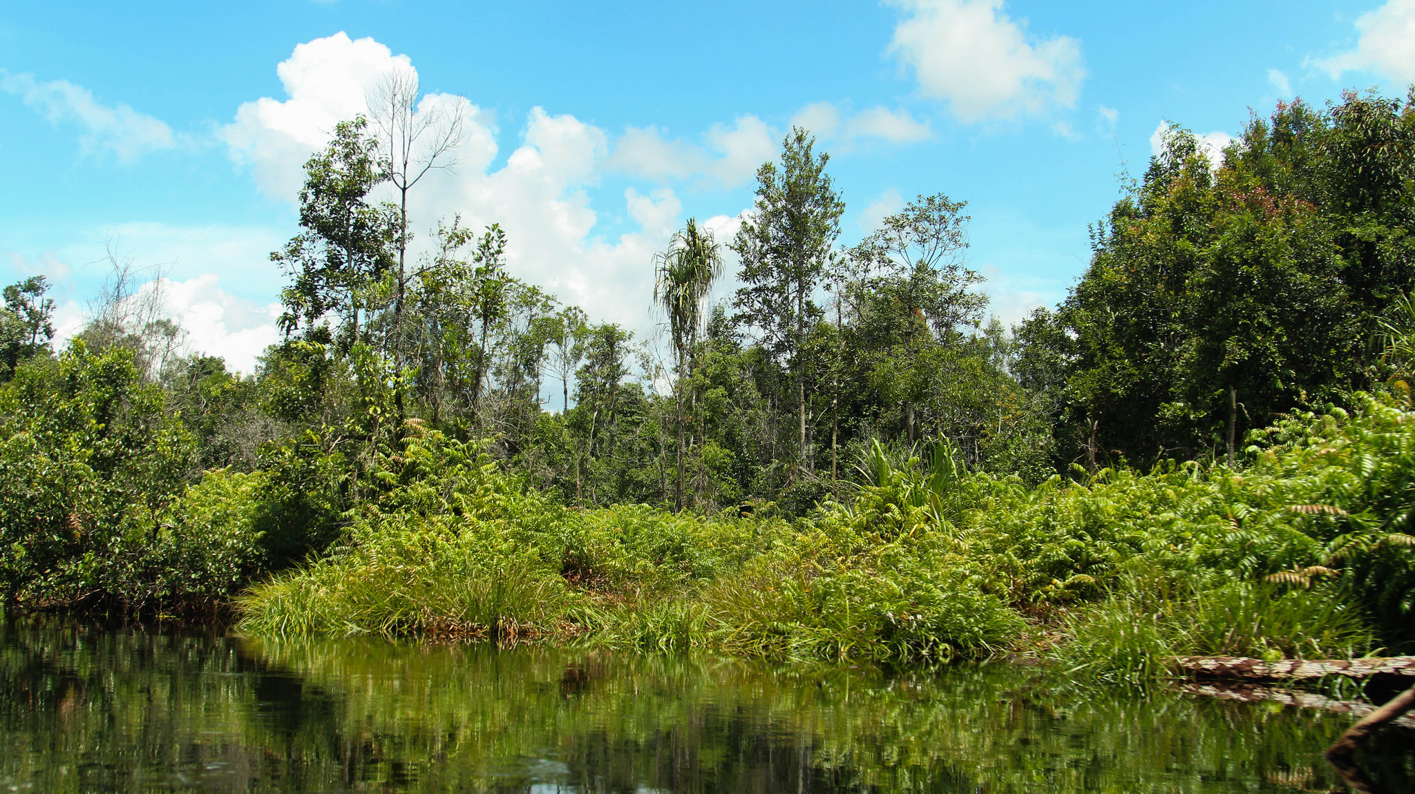 <p>Peat swamp in Central Kalimantan, Indonesia. Flickr/WRI</p>